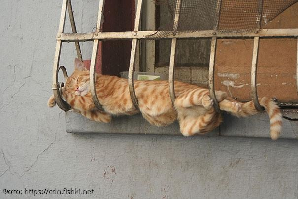 10 фотографий, которые доказывают, что коты могут спать когда угодно и где угодно