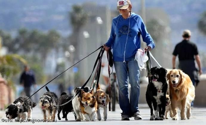 Выгул собаки без намордника может обойтись хозяину в 5 тысяч рублей