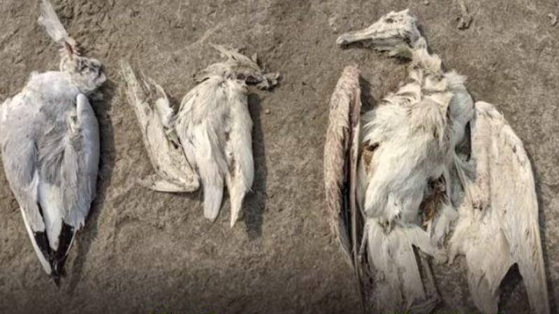 В Индии при загадочных обстоятельствах погибли 5 тысяч птиц