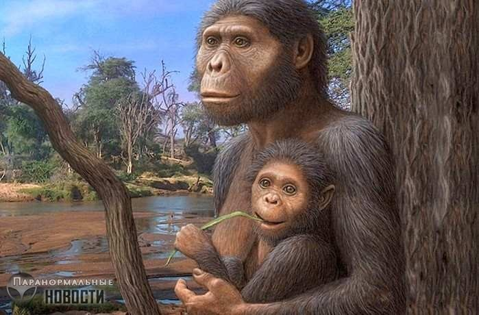 Ученые внезапно обнаружили, что древние австралопитеки были глупее современных обезьян