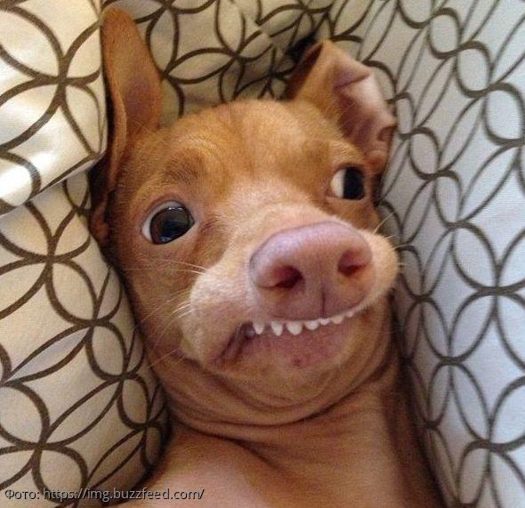 10 фото самых уродливых собак, которые обаяли весь мир