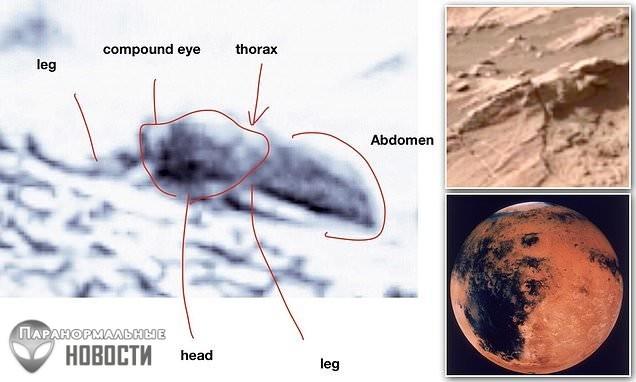 Энтомолог из США разглядел на снимках Марса множество насекомых