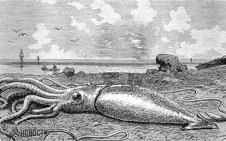 Загадка обнаружения живых и мертвых гигантских кальмаров на севере Канады