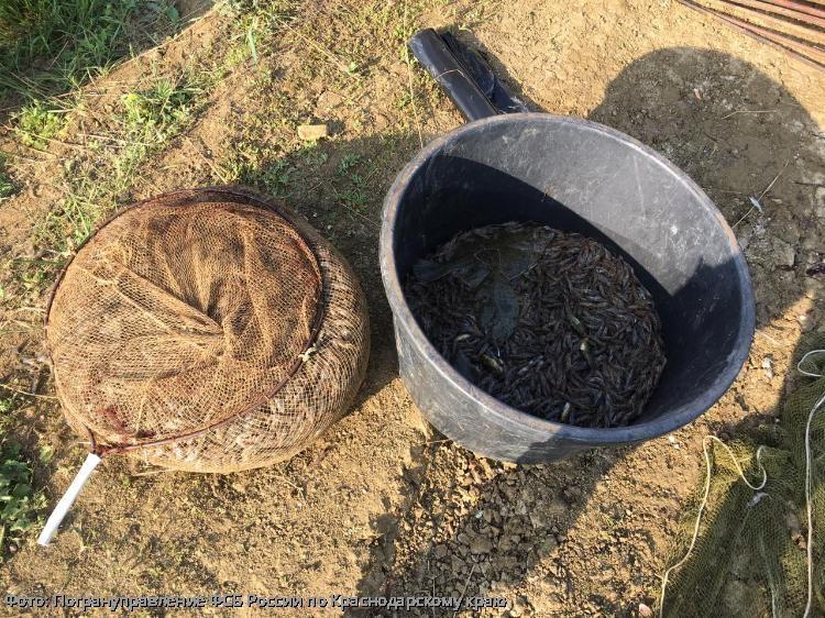 Браконьеры из Темрюкского района заплатят крупный штраф