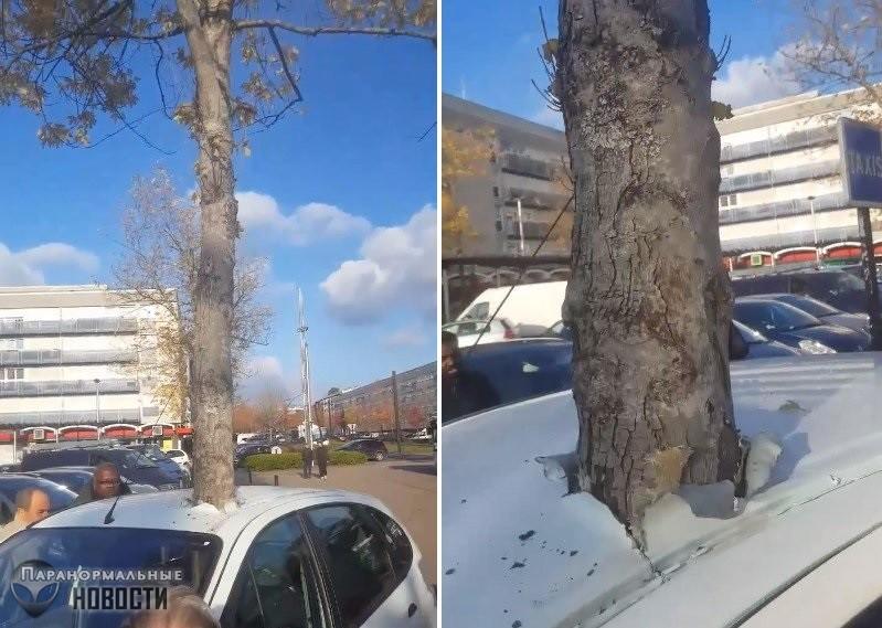 Телепортация или глюк в Матрице? Во Франции автомобиль был странным образом пронзен растущим деревом