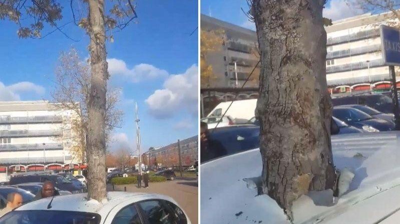 «Сбой в матрице»: во Франции растущее дерево пронзило автомобиль