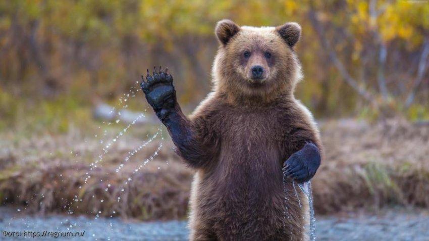 10 фактов о медведях, о которых нам не рассказывали в детстве
