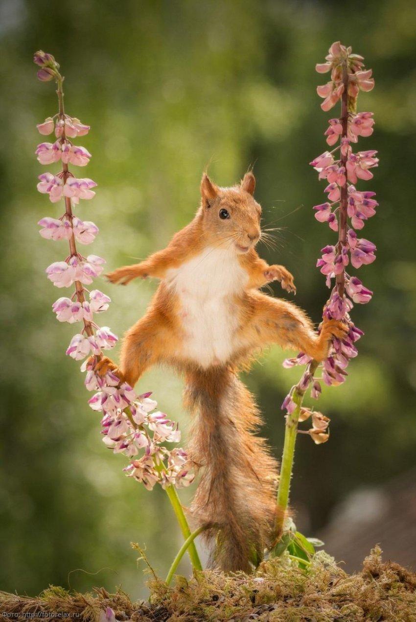 Забавные фото животных для поднятия настроения