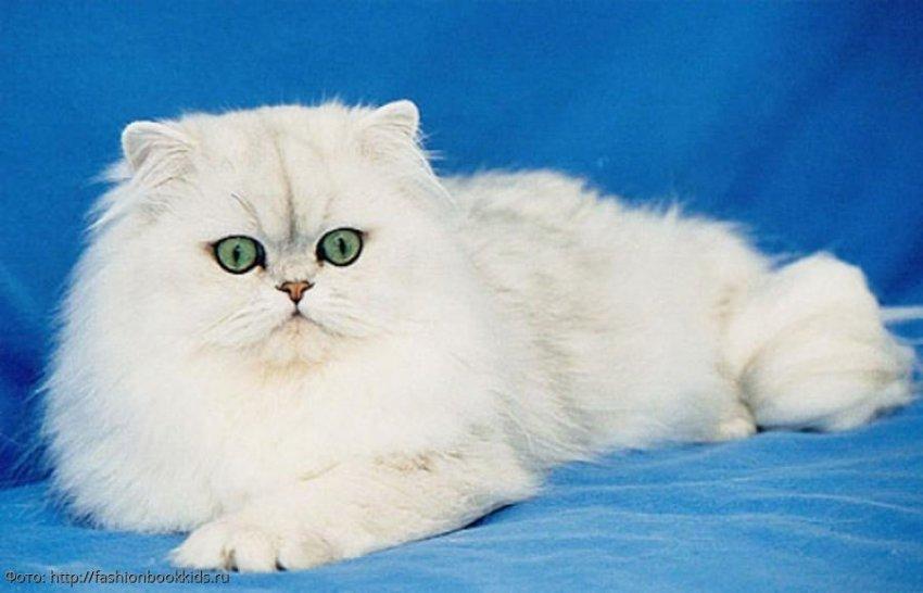 7 интересных фактов о кошках