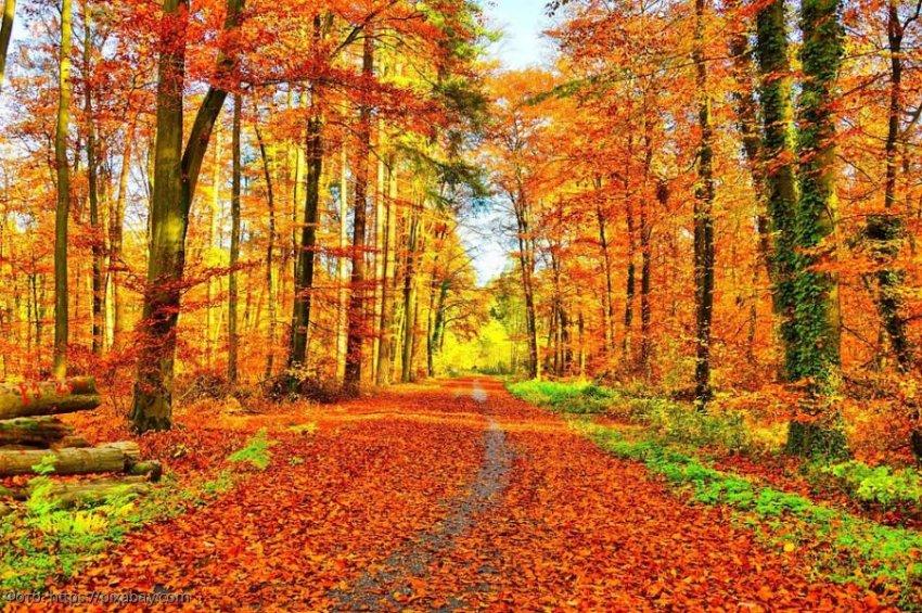 Советы от ангела-хранителя на 7 ноября для всех знаков зодиака