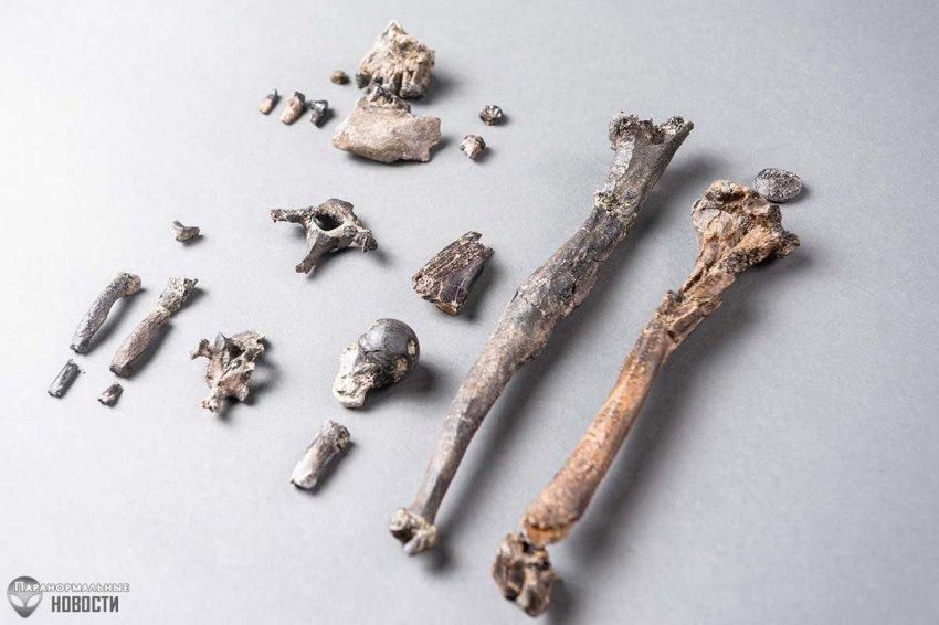 Новое звено эволюции: В Германии откопали кости обезьян, которые ходили на двух ногах еще 12 миллионов лет назад