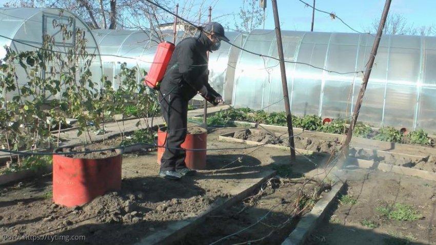 Лунный календарь садовода-огородника с 11 по 17 ноября