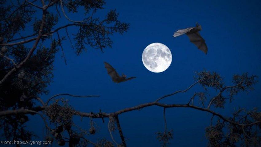 Лунный прогноз красоты и здоровья на 12 ноября