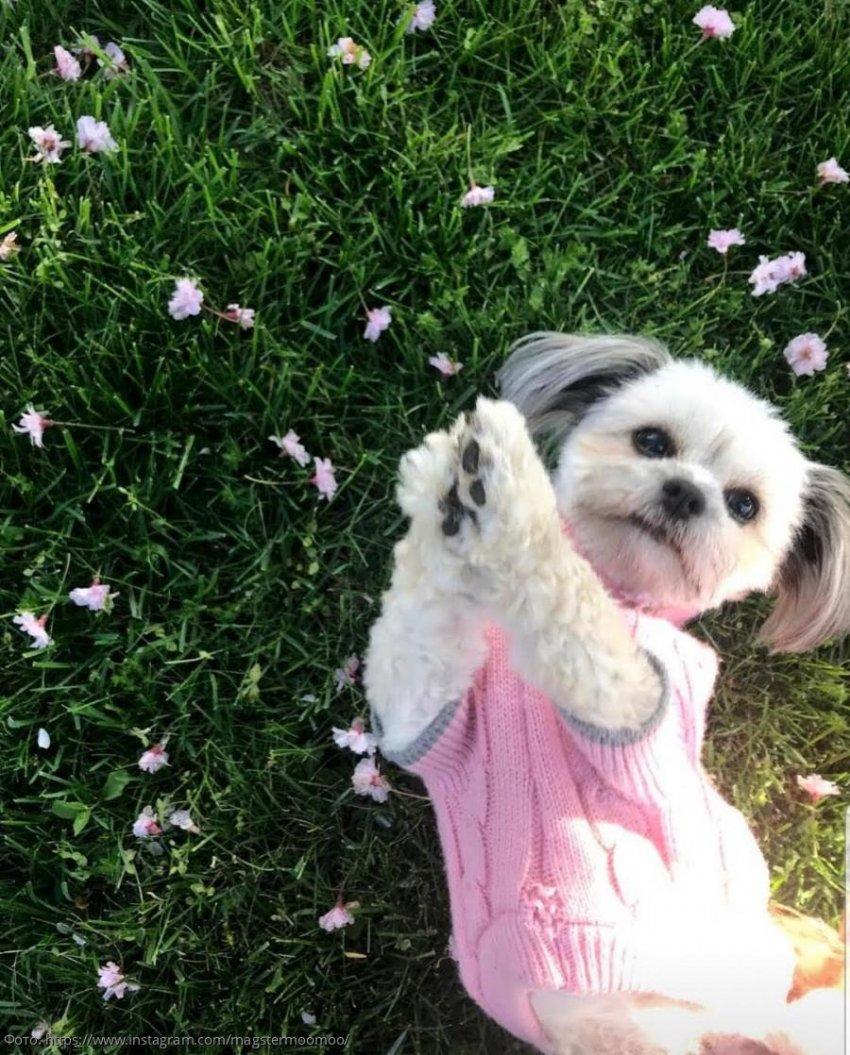 Собака, которая украла у своего хозяина зубные протезы, решила их примерить и стала звездой интернета