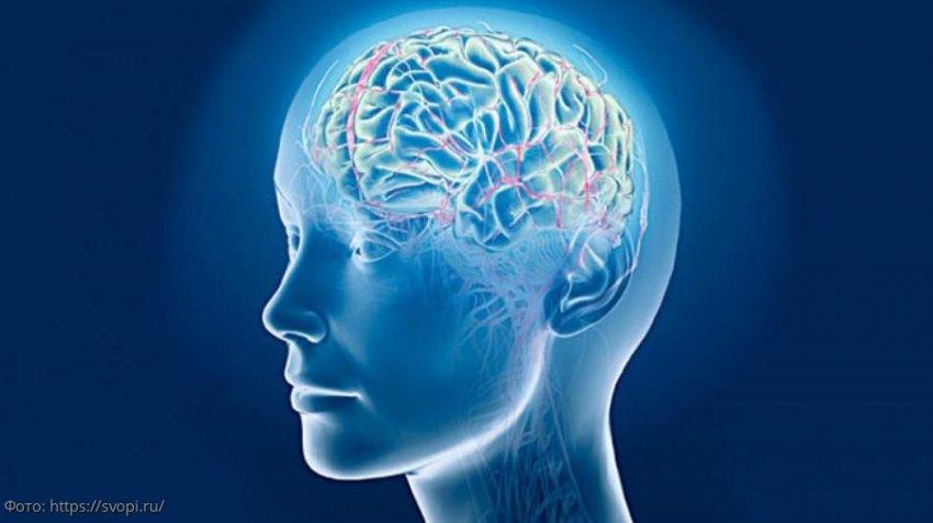 Нейробиолог Эми Райхельт рассказала о том, что сахар делает с мозгом человека