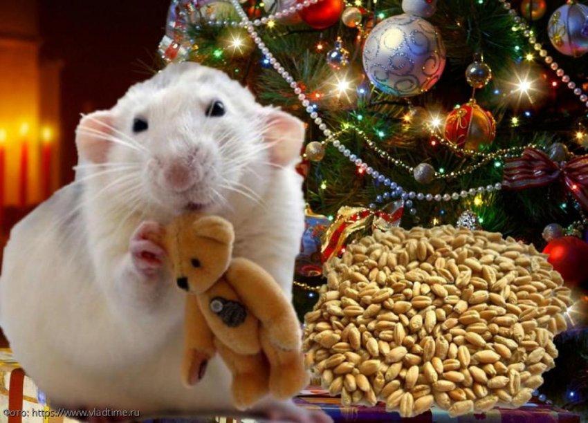 Год Крысы: прогноз на 2020 год для людей, родившихся в год Крысы, Быка и Тигра