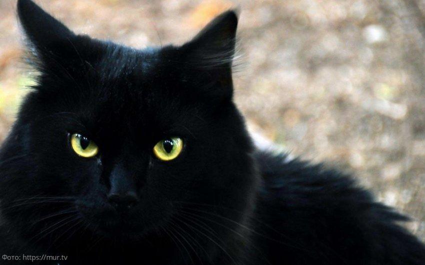Пропавшую кошку вернули хозяину спустя пять лет после ее исчезновения