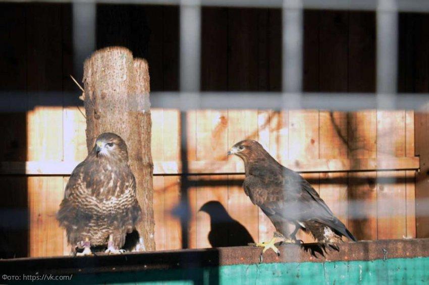 В московском приюте «Орнитарий» помогают больным, искалеченным и нуждающимся в помощи птицам