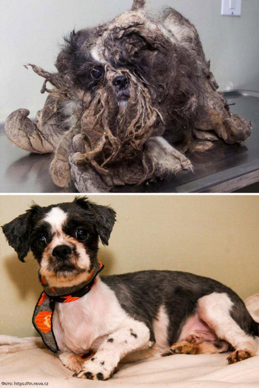 Парень подобрал несчастного щенка на улице и оказался осужденным за воровство