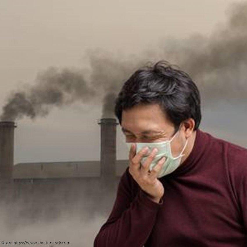 Загрязнение воздуха приводит к атрофии мозга, подобной болезне Альцгеймера