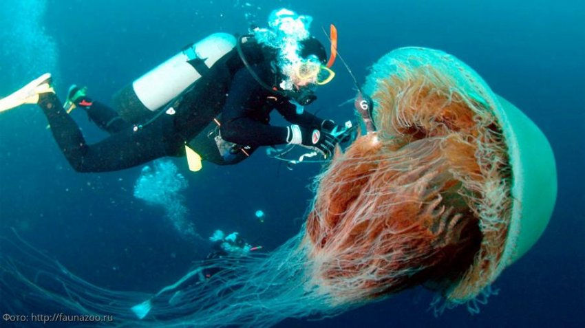 Морские животные помогут людям в исследовании океана