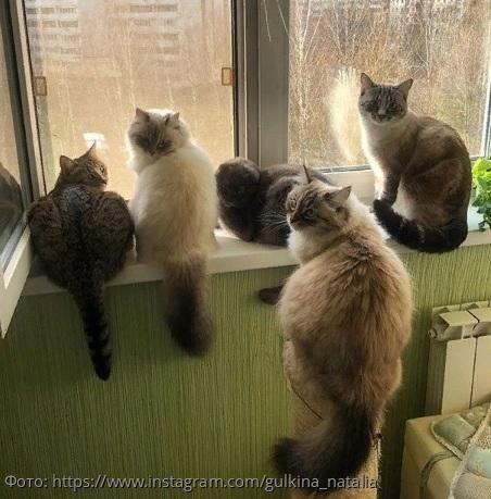 Коты Наталии Гулькиной стали настоящими звездами Instagram