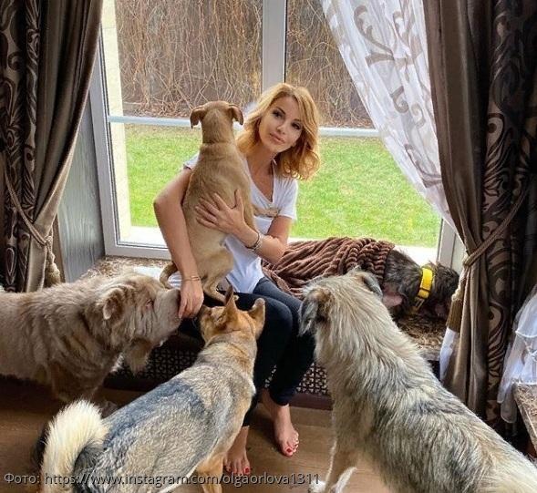 Беспородное счастье Ольги Орловой: певица спасает изувеченных и брошенных псов