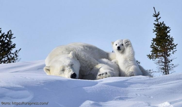 Весёлые фото животных, способные поднять настроение и сделать день более позитивным