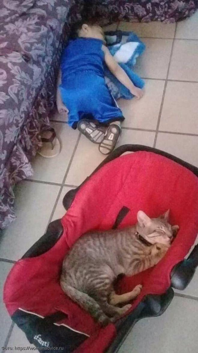 """11 фотографий из серии """"Я – кот, что хочу, то и делаю"""""""