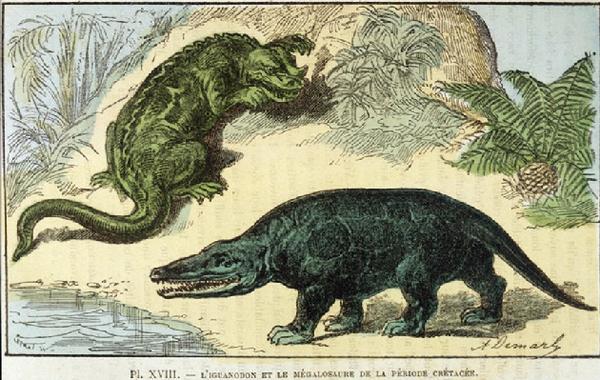 Кошмарные рисунки показывают как выглядели бы животные, если бы их рисовали на основе их скелета, как рисуют динозавров