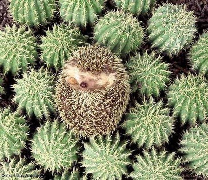 """Смешные """"сплюшки"""": 13 фото животных, которые """"внезапно"""" заснули в непонятной позе и в неудобном месте"""