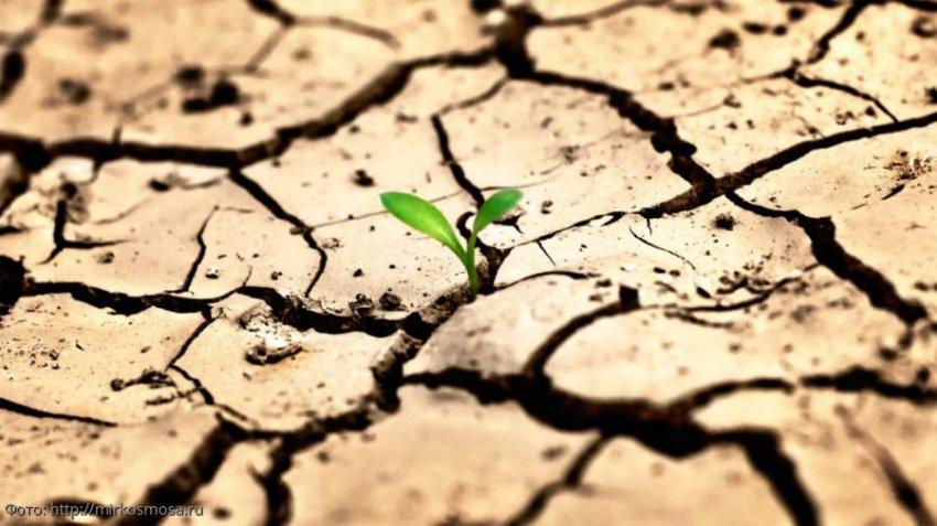 Международная группа ученых-климатологов назвала сроки наступления всемирного голода