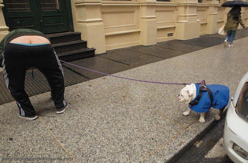 Такие фото собак вы еще не видели: снимки от известного уличного фотографа, на которые можно смотреть вечно