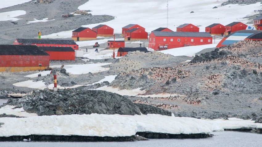 Длительное пребывание в Антарктиде существенно уменьшает мозг