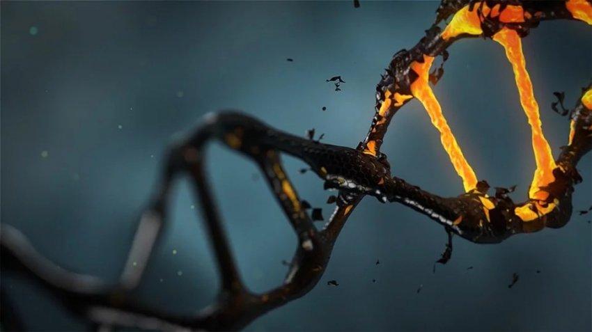ДНК жителя Невады полностью изменилась после пересадки костного мозга