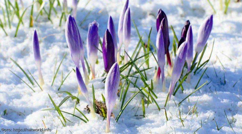 Три знака зодиака, представители которых могут изменить свою жизнь уже этой весной