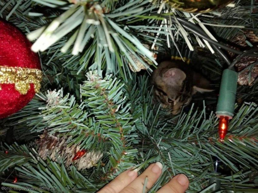 10 смешных фото, доказывающих, что кошки - главное украшение елки