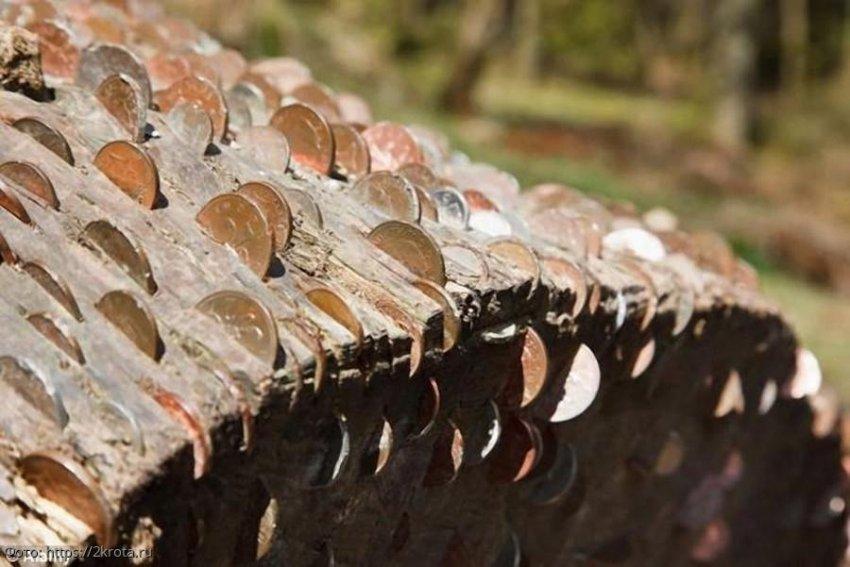 Несколько деревьев, полных монет, было обнаружено в английских лесах национального парка Peak District