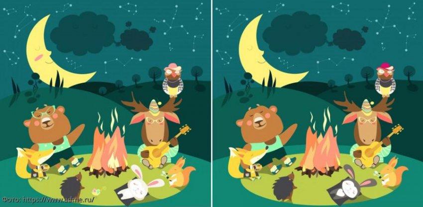 Разминка для мозгов: найди в картинках с животными на поляне 10 отличий