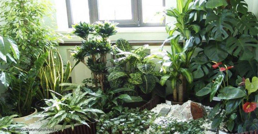 Четыре комнатных растения, которые привлекают богатство в дом