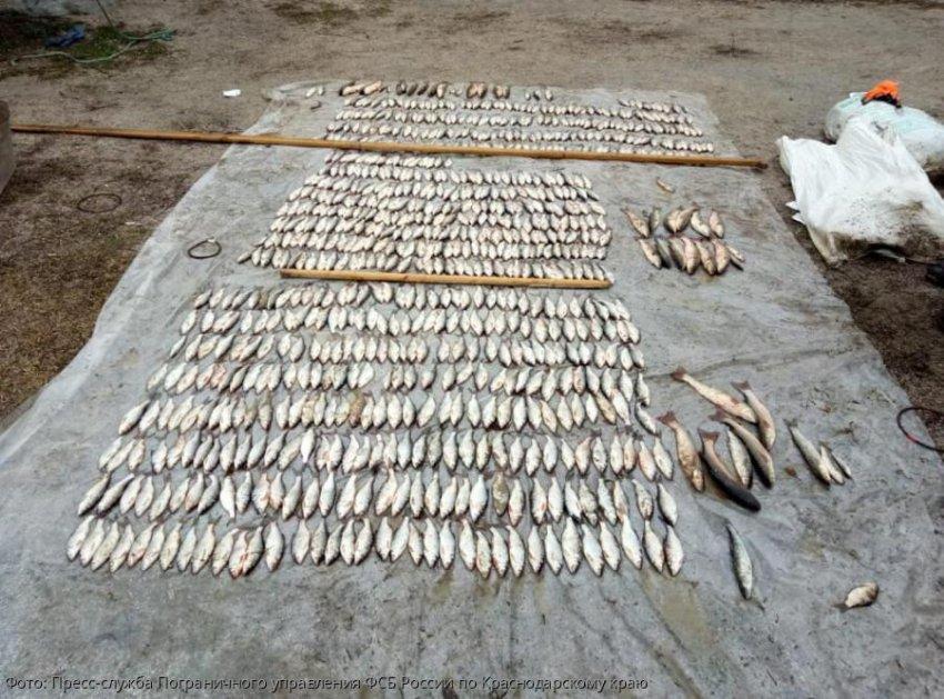 За незаконную добычу водных биоресурсов жителя Краснодарского края приговорили к 2 годам и 6 месяцам лишения свободы условно