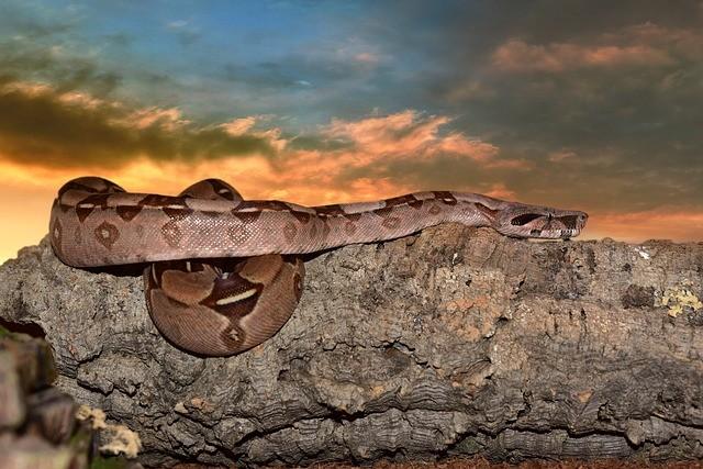 Встречи с гигантскими змеями в Кабардино-Балкарии