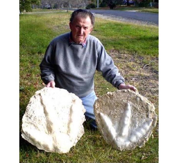Огромные новозеландские страусы Моа на самом деле не вымерли и все еще встречаются в густых лесах