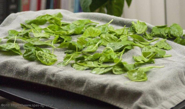 Совет: как сушить зелень