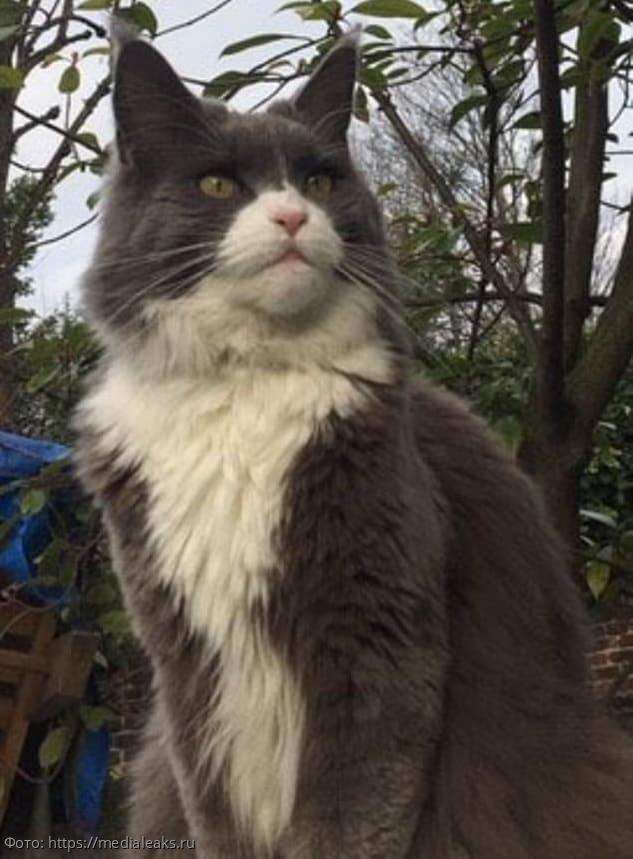 Женщина покормила чужого кота, а ревнивые хозяева отсудили у нее 1,6 млн рублей