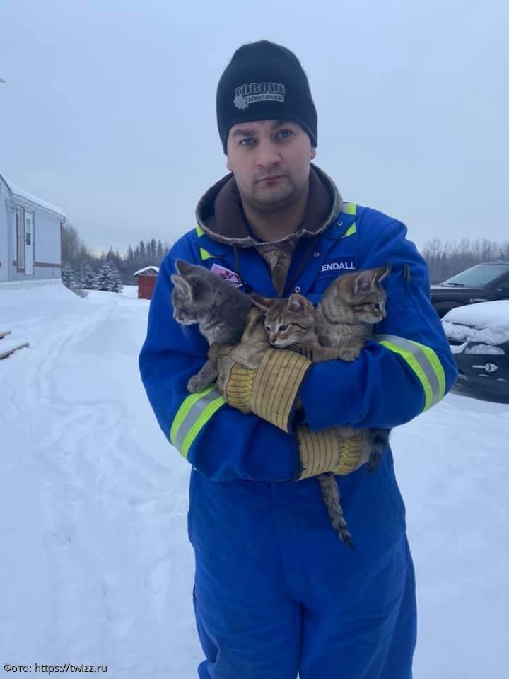Мужчина спас вмерзших в снег котят и в этом ему помог горячий кофе