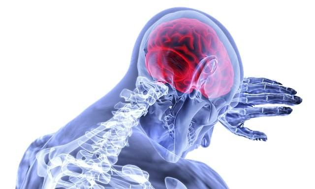 Деградация или оптимизация? За последние 20 тысяч лет мозг человека уменьшился на 17%