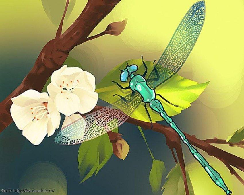 Тест на внимательность: посмотрите на картинку со стрекозой и определите, что на ней не так