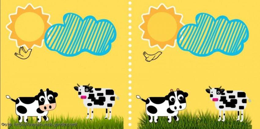 Разминка для мозгов: найди в картинках с пасущимися коровами 5 отличий