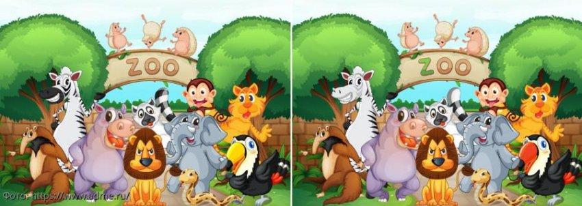 Разминка для мозгов: найди в картинках с животными из зоопарка 4 отличия